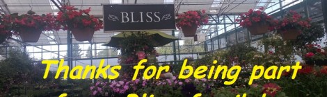 Daily Bliss #20130604