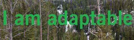 I am adaptable