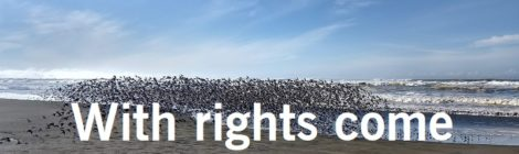 With rights come responsibilities
