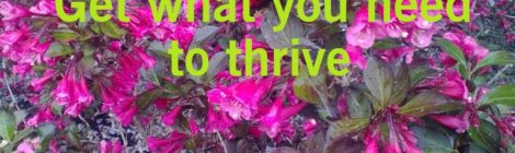 Get what you need to thrive